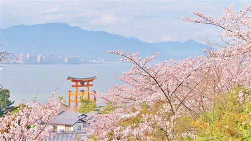 ▲在櫻花的襯托下,宮島的景色彷彿上了一層浪漫的濾鏡,連朱紅色的鳥居也變得色調粉嫩。(圖/shutterstock.com)