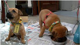 基隆,警犬,棄養,小黃,暖暖派出所(圖/翻攝畫面)