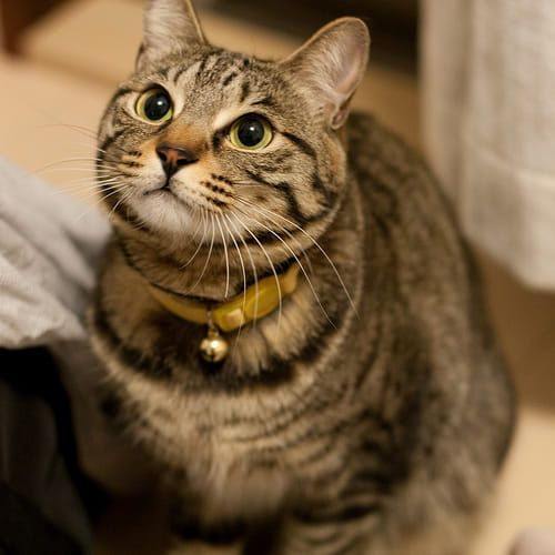 網友國中養了一隻虎斑貓不見了,長大後發現原來牠「一直在身邊」。(圖/翻攝靈異公社)