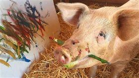 豬界傳奇!來自南非的天才「豬卡索」(Pigcasso)有個特殊天賦「畫油畫」,2016年豬卡索被主人(Joanne Lefson)從屠宰場救出來,之後主人意外發現牠懂得叼起油漆刷,於是靈機一動拿出畫布讓牠作畫,沒想到作品非常好看,也讓牠意外獲的高人氣。(圖/翻攝自pigcasso.org)