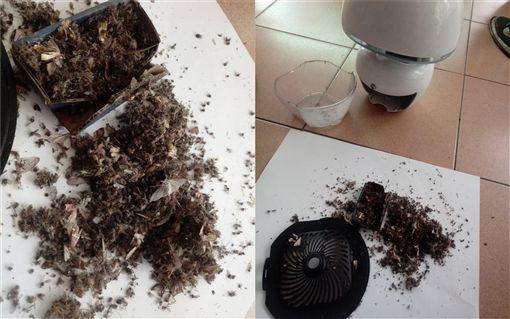 好市多「捕蚊神器」裝滿蚊蟲屍體。(圖/翻攝自Costco好市多 商品經驗老實說)