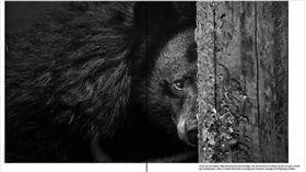 jimmybeunardeau IG,台灣黑熊,動物保育,16:9