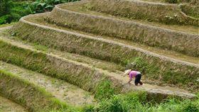 中國,農田,農業(圖/翻攝自pixabay)