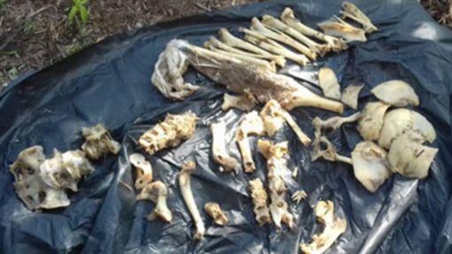印尼,鱷魚,吃人,骸骨,肚子(圖/翻攝中國網)