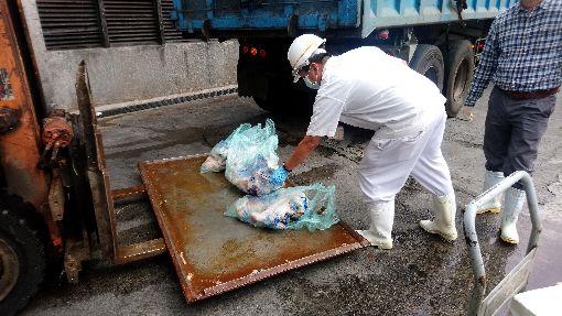 北市關渡公園及家禽批發市場發現禽流感案例台北市動保處19日晚間在記者會中表示,16日接連獲報於關渡自然公園發現死禽、家禽批發市場屠宰檢查疑有染禽流感雞隻,後皆確診為H5N2亞型高病原性禽流感,屠體皆已依規定化製銷毀。(台北市動保處提供)中央社記者黃麗芸傳真 108年3月19日