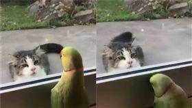 來玩躲貓貓阿!紐西蘭有隻名為Oscar的紅領綠鸚鵡,日前它被主人拍下不斷在窗邊「嗶咘、嗶咘」的叫,就好像在找窗外的小貓玩躲貓貓一樣,超挑釁的模樣被網友笑稱「一看就知道是老江湖」。(圖/翻攝自IG@oscar.george.and.poppy)