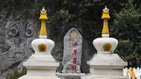 中國大陸,雲南,千年菩提,佛手(圖/翻攝新浪微博)