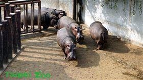 台北市立木柵動物園。(圖/取自臉書)