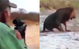 獵人開槍射殺獅子(圖/翻攝自YouTube)