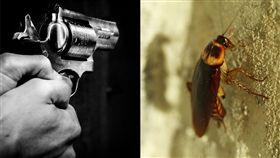 美國密西根州,蟑螂,中槍  (示意圖/取自Pixabay)