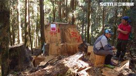 國際森林日,林務局,山老鼠 圖/林務局