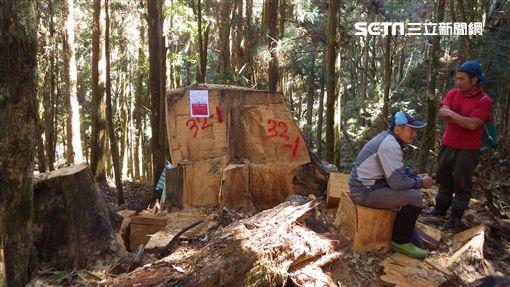 國際森林日,林務局,山老鼠圖/林務局