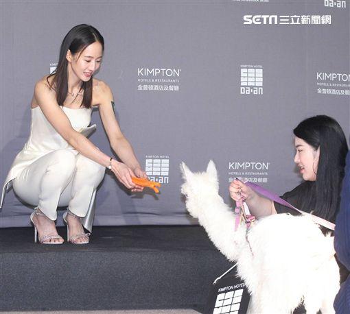 張鈞甯返台出席精品飯店開幕活動。(圖/記者邱榮吉攝影)