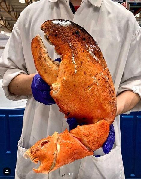 美國,Costco,好市多,巨型龍蝦螯(圖/翻攝自IG)