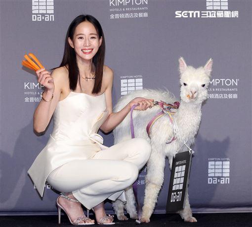 張鈞甯與羊駝進住為寵物友善飯店金普頓大安酒店。(記者邱榮吉/攝影)