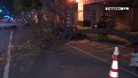 樹倒砸騎士0600(DL)