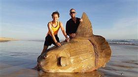澳洲,翻車魚,曼波魚,擱淺,海洋,巨變,赤道,南半球,區域 圖/翻攝自臉書