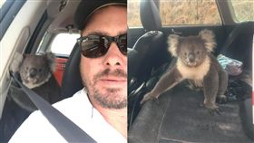 (圖/翻攝自臉書)澳洲,麥克拉倫谷,無尾熊,不速之客
