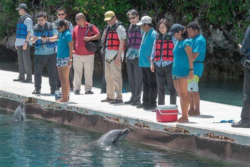 蔡英文總統23日到尼可灣和海豚灣觀賞海豚復育成果。(圖/總統府提供)