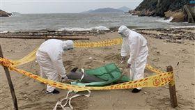 馬祖又見死亡海豚(1)海巡署金馬澎分署岸巡隊24日上午在南竿復興灘岸發現一隻死亡海豚,在拍照存證後,隨即將海豚屍體就地掩埋。(馬祖岸巡隊提供)中央社 108年3月24日