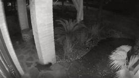 拍到幽靈貓?美監視器拍到黑貓瞬間消失 嚇壞屋主(圖/翻攝自BSW TOPSTORIES YouTube)
