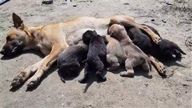狗,母愛,肉身,擋車,幼犬,志工,高雄,吊車