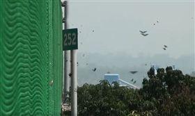 時值生態奇觀的紫斑蝶遷徙季節,群蝶不時通過雲林縣林內鄉、飛越國道3號高速公路觸口路段,今(26)日天氣轉晴,群蝶飛舞再現,經觀察統計每分鐘逾1200隻,是近年之最。(圖/翻攝自臉書雲林縣林內鄉紫斑蝶季活動)