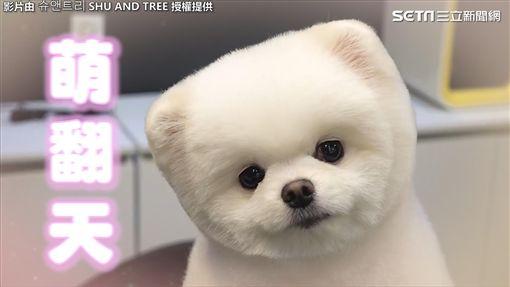 韓寵物理容院分享狗狗理毛影片爆紅。(圖/슈앤트리臉書授權)