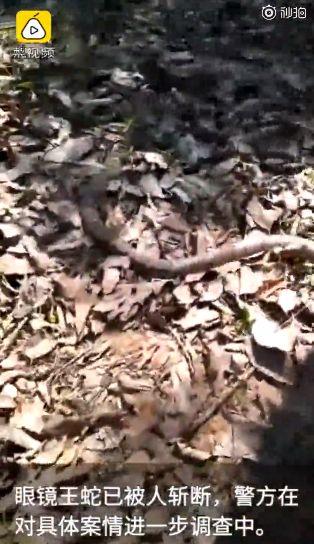 抓眼鏡王蛇「握頭踩尾」!男慘被咬亡(圖/翻攝自微博)