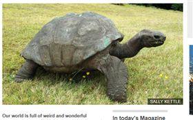 超高齡的巨龜「強納森」。(圖/翻攝自BBC NEWS)