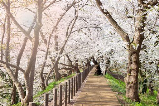 ▲粉色夢幻天堂─霞城公園(圖/shutterstock.com)