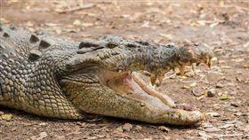 澳洲,鱷魚,意外,死亡 圖/翻攝自澳洲新聞網