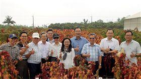 農委會台東農改場培育的「台灣藜台東1號」通過命名,這也是國內第一個命名的台灣藜品種。(台東農改場提供)中央社記者盧太城台東傳真 108年3月28日