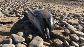 (圖/翻攝自推特)法國,海豚,屍體