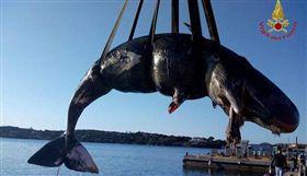 (圖/翻攝自Sergio Costa臉書)義大利,抹香鯨,屍體,塑膠,海洋