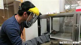 疾管署為全國目前唯一生產供應抗蛇毒血清機構,共飼養約200條台灣常見毒蛇。(圖/記者楊晴雯攝)