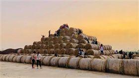 巨型捲心酥 金億陽蘑菇農場-稻草捲心酥打卡地臉書