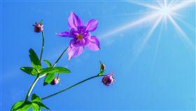 太陽、陽光、夏天/pixabay