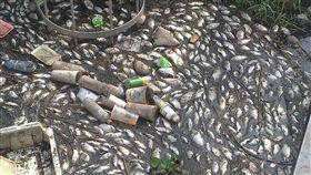 宜蘭縣壯圍鄉一處抽水站引水幹道,30日被民眾發現有大量魚群暴斃,經環保局派員前往勘查,初步判定為溶氧過低所致。(翻攝照片)中央社記者王朝鈺傳真 108年3月30日