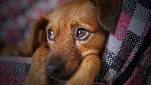 寵物、貓、狗、毛小孩、毛孩 (圖/pixabay)