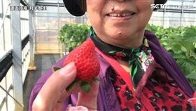 草莓吃到飽!