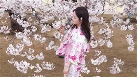 拍照,櫻花,手殘,東京,英國,賞櫻,變臉,感受,遊客,合照,攝影,正妹 圖/翻攝自YouTube