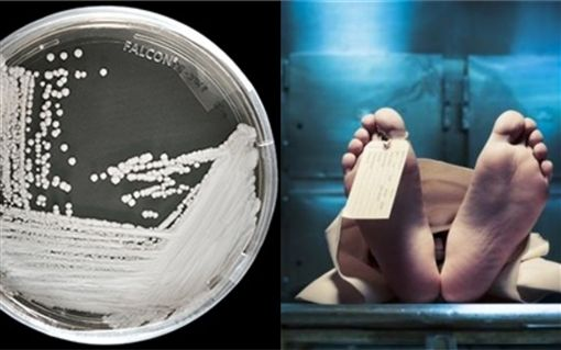 神秘超級細菌,耳念珠菌,死亡率,全球 (圖/翻攝自CDC,Pixabay)