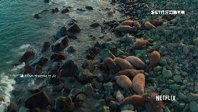 海象墜崖亡1200