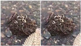 房產商「放生40公斤蛇」求財運(圖/翻攝自微博)