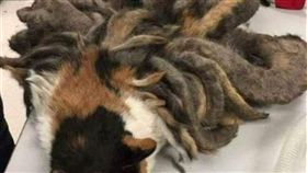 野貓被當作九尾狐 圖/翻攝自微信