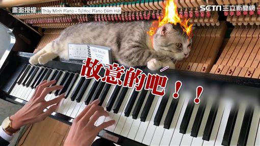 貓皇被奴才超醒很不爽。