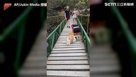 毛孩腿軟堅決不過吊橋 主人暖心趴下陪爬過橋