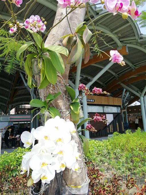 台東火車站近日多了柔美、色彩繽紛的蝴蝶蘭,讓舒適明亮的候車空間,更顯春意盎然。(台東火車站提供)中央社記者李先鳳傳真 108年4月9日