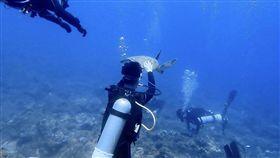 海龜,小琉球。(圖/翻攝自靠北潛水)